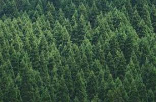 Timberwolf Planting