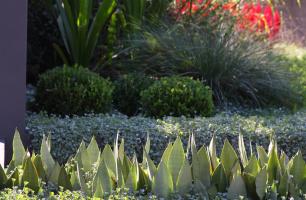 Landscape Designer / Landscape Architect